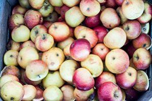Jak zrobić domowy ocet jabłkowy? Prosty przepis - ocet robi się sam!