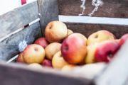 Proste zasady zdrowego żywienia według Andreasa Moritza