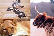 Warsztaty: Energia i symbolika zwierząt mocy