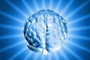 Otyłość nie pozostaje bez wpływu na mózg